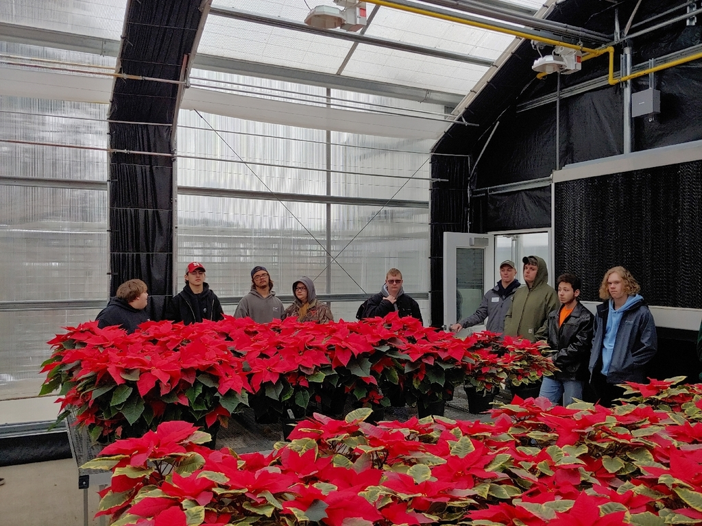 Poinsettia green house